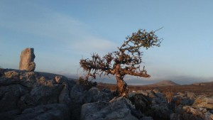 Burren in Winter